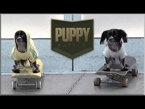 BATB X | Puppy Battle - The Berrics