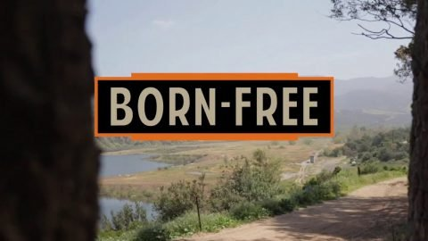 Born-Free 11- Giveaway Bike | Loser Machine Company