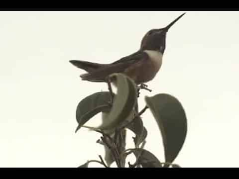 Hummingbirds - Joey Sinko