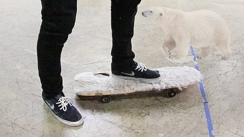 POLAR BEAR GRIP TAPE?! - Braille Skateboarding