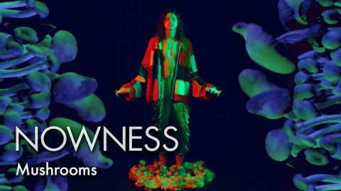 Take a psychedelic mushroom trip in partnership with Somerset House   NOWNESS